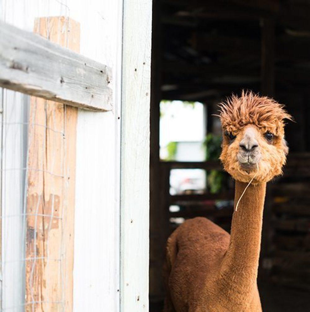 Photographie animalière et agricole